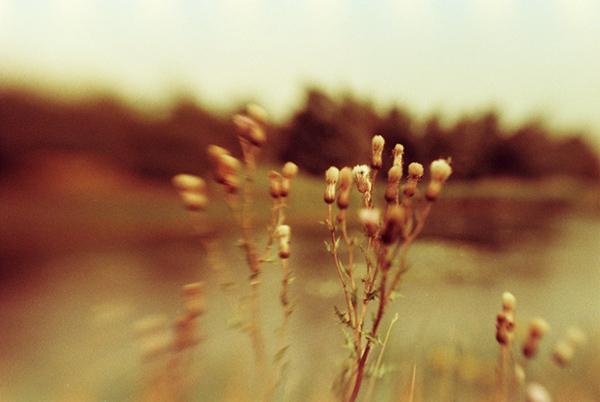Eine Kombination aus Redscale-Film und LensBaby-Einsatz macht das Foto doppelt außergewöhnlich.